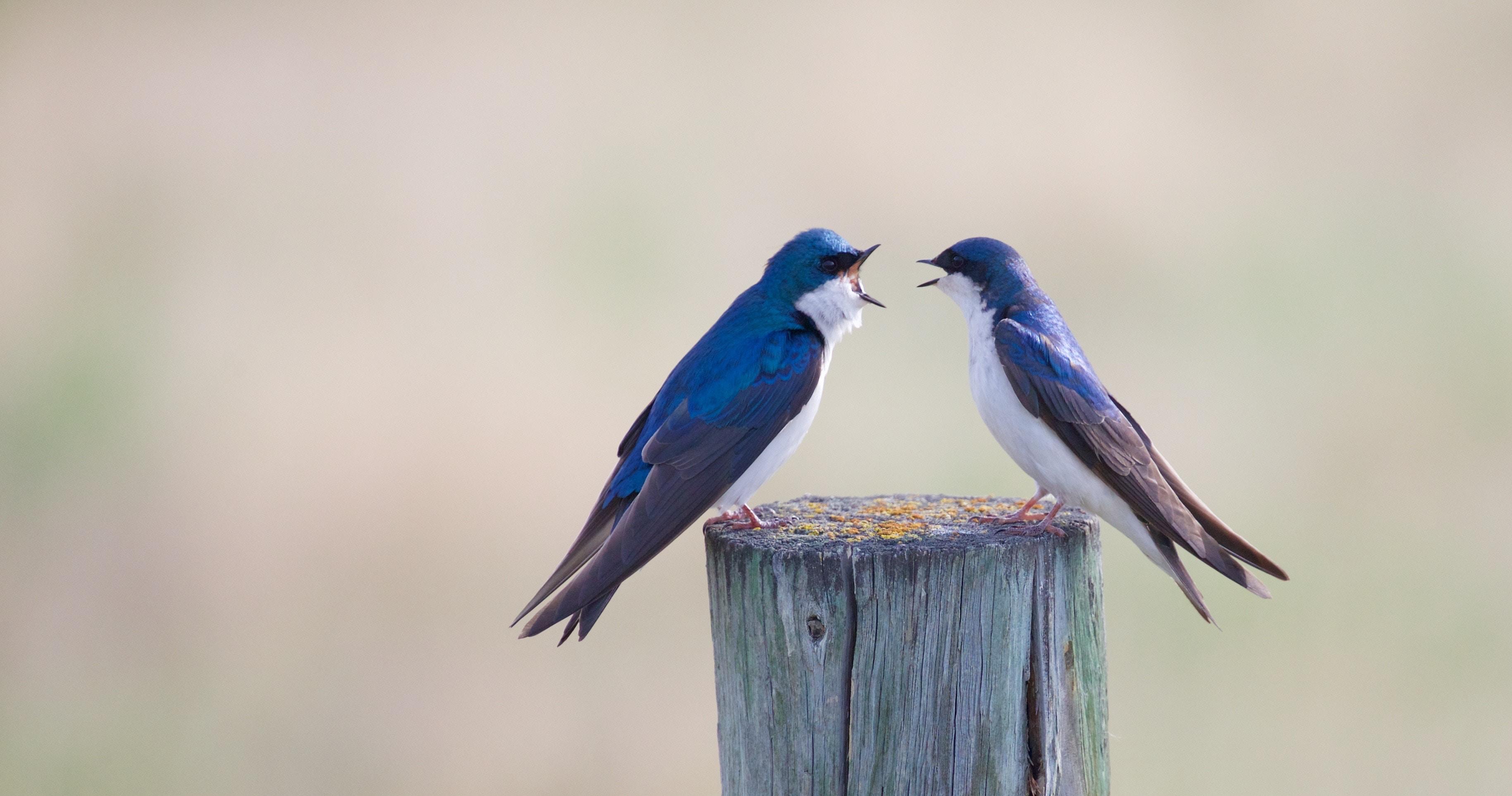 [TEST] Et vous, comment gérez-vous les conflits au travail ?