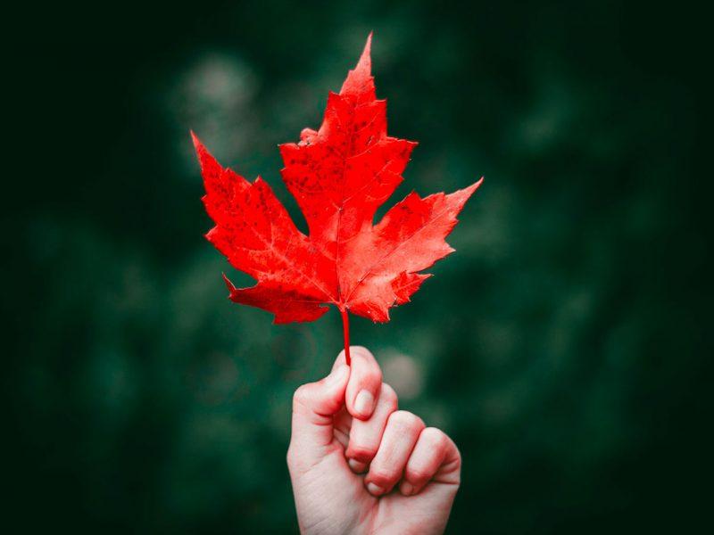 Transformation numérique et secteur public : écoutez 8 expériences au Québec