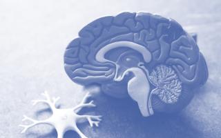Le Guide de l'EAP #11 – Les 12 lois du cerveau (2/3)